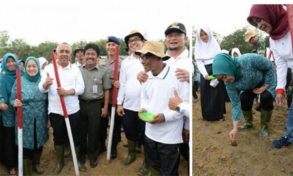 Gubri: Mari Wujudkan Riau Jadi Pengekspor Jagung