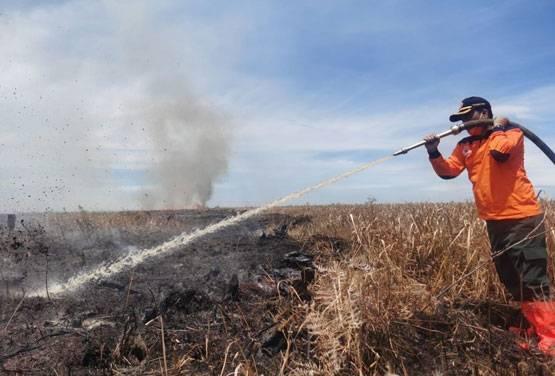 Titik Api Kembali Muncul di Rohil, BPBD Kembali Kerahkan Petugas dan Heli