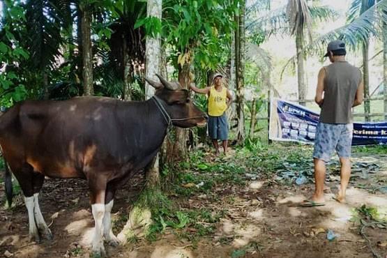 BPKH Riau Salurkan Hewan Kurban untuk Desa Terpencil