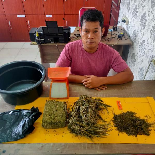 Polres Siak Tangkap Pengedar Narkoba, Sita 730 Gram Ganja